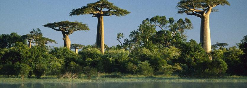 Atmosphériques de Madagascar