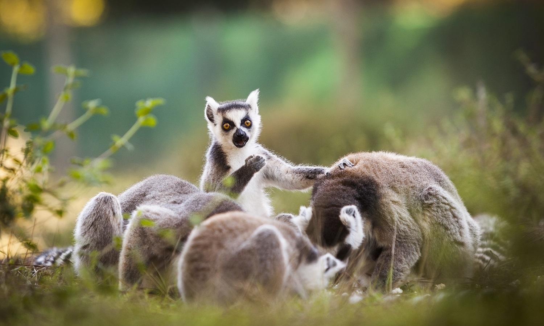 FAUNE – Parc animalier de Labenne