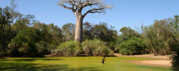 La nature à Madagascar