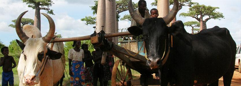 La culture malgache