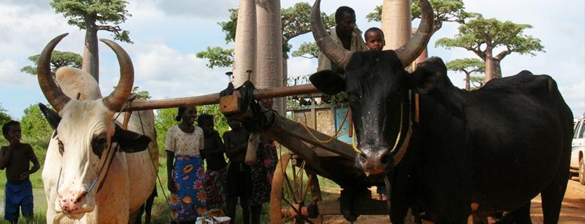 La culture malgache : coutumes et traditions